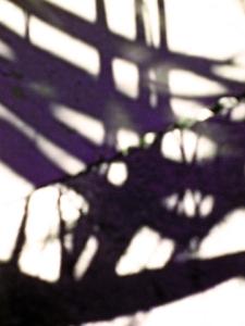 Flax shadows (090310)