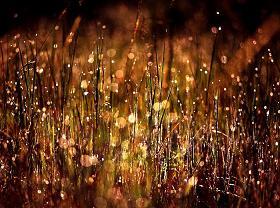 Grass, Dew, Morning Sunlight, (c) Greg McKinney