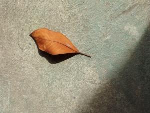 leaf (02 Feb 2012)
