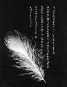 TTC feather image