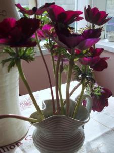 anemones (11 September 2014)
